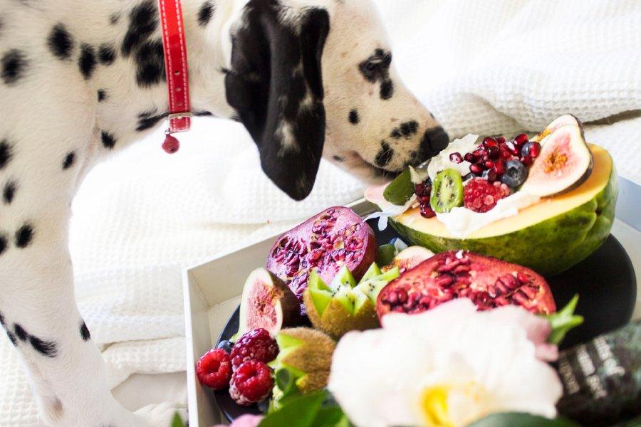 All-Pets-KY-Frankfort-Kentucky-animal-clinic-nutrition